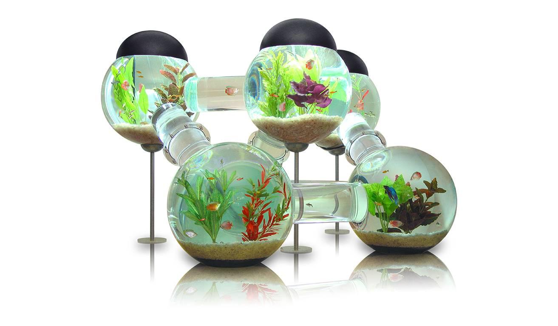 Aquarium de luxe pour poissons aventureux.