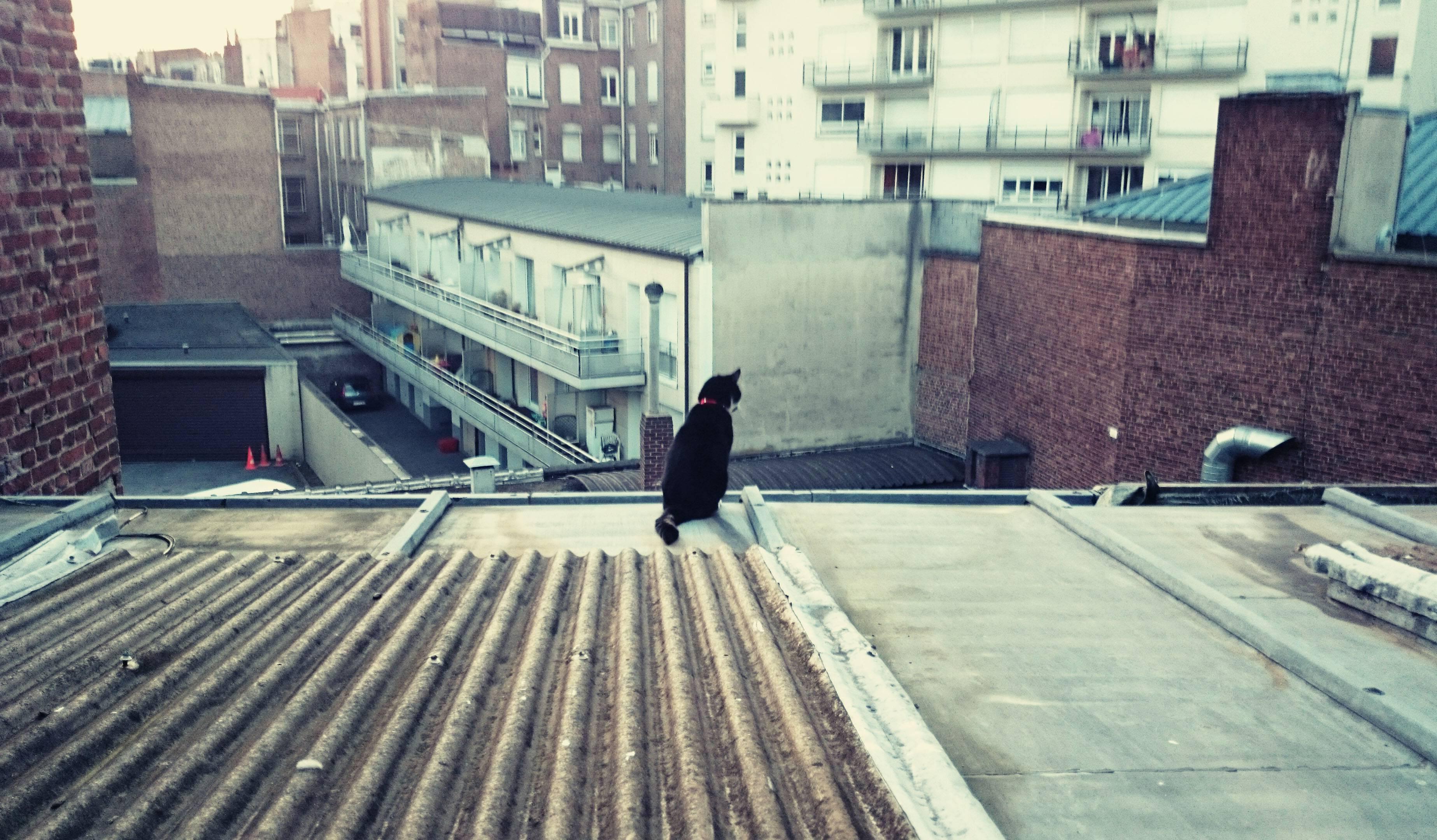 Lille (Nord), le 10 juin. Vue féline sur les toits de la ville.