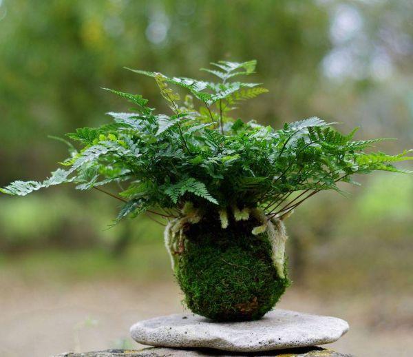 DIY : Tout savoir sur l'art végétal du kokedama