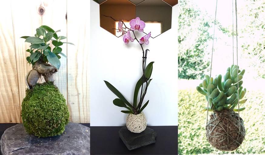 comment faire un kokedama kokedama mode d emploi bonsai japonais. Black Bedroom Furniture Sets. Home Design Ideas