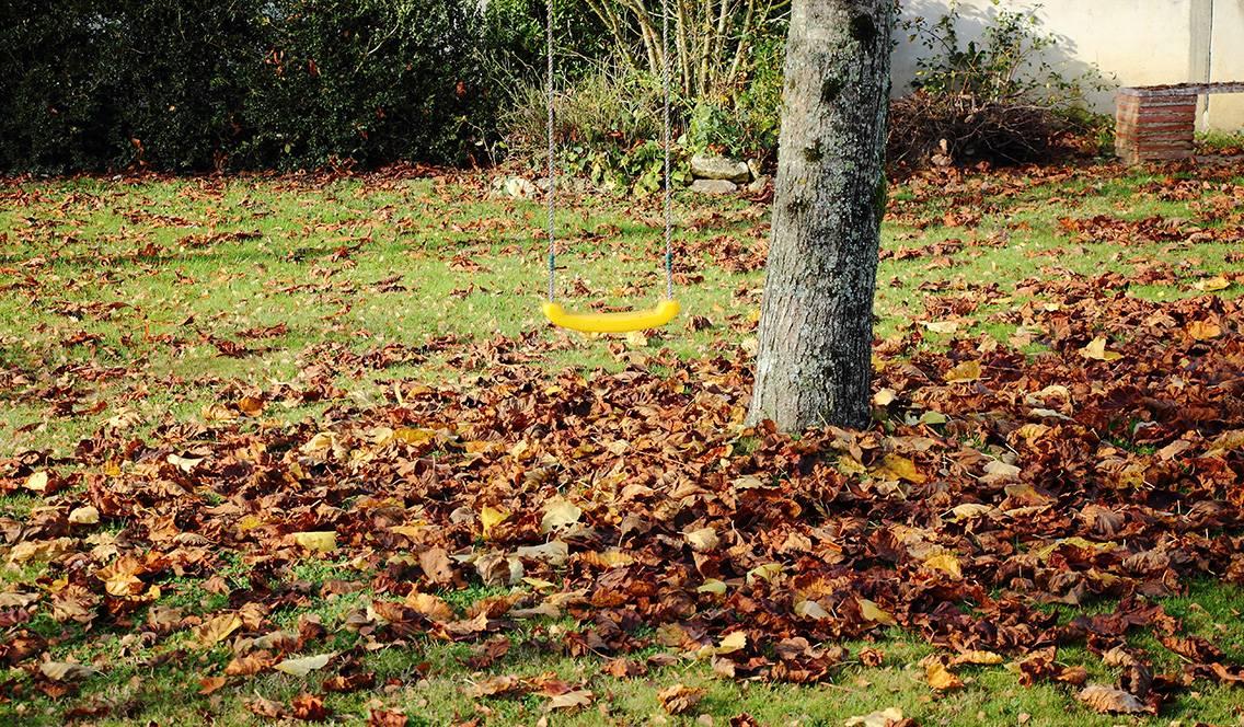 Ramassez les feuilles mortes afin de préserver la beauté de votre pelouse.