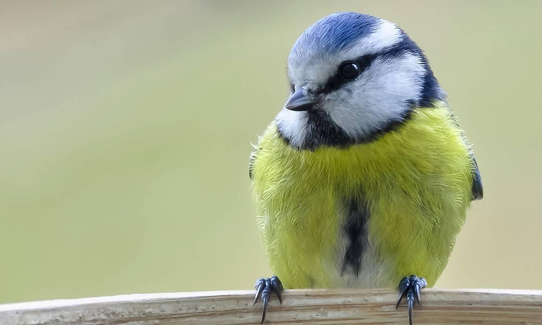 DIY : Fabriquez une maison pour les oiseaux