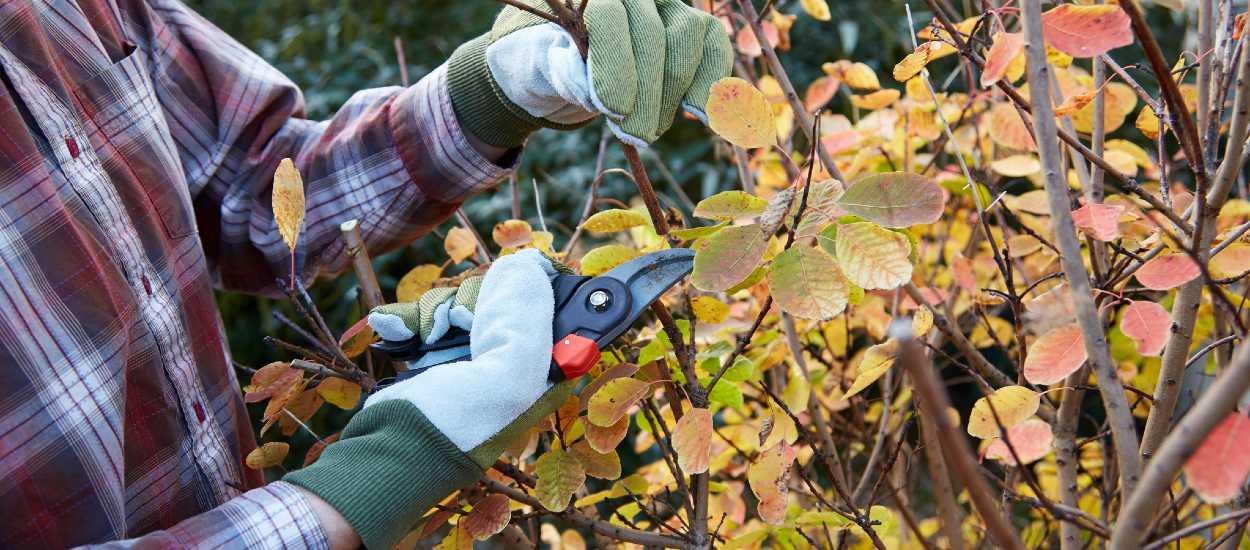 Tout ce que vous devez savoir pour préparer votre jardin à l'hiver
