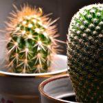 Retrouvez la main verte et dites adieu aux cactus