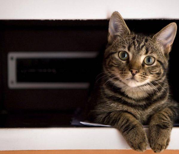 La bonne idée DIY : une litière pour chat cachée dans un meuble