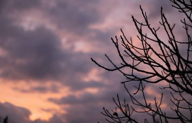 Soleil rose à Rognac (Bouches-du-Rhône), courant décembre.