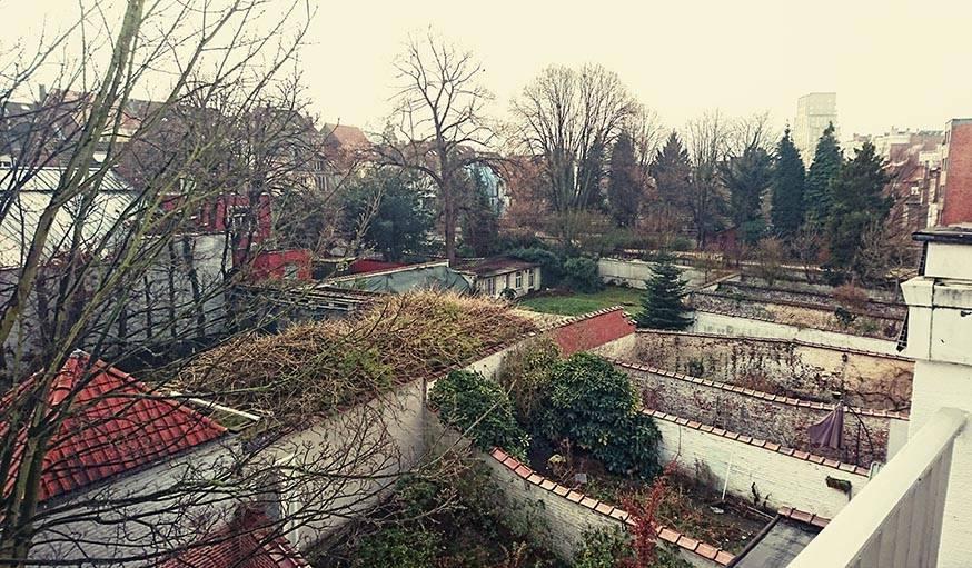 L'année a commencé en douceur. Le 1er janvier, vue sur des jardins à Ixelles (Belgique).