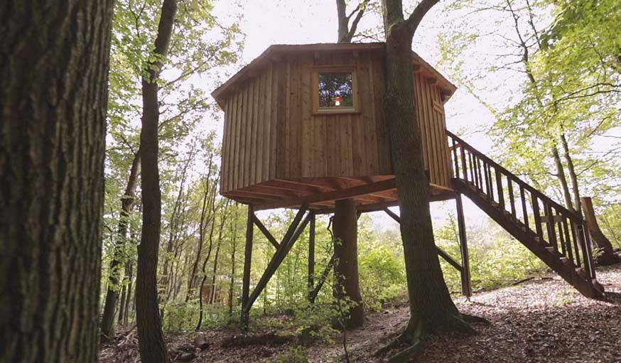 Une cabane qui enserre un arbre, au Baumhaushostel.