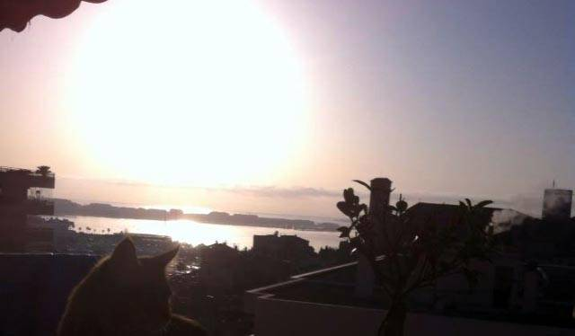 Vu d'un balcon de Cannes, en bonne compagnie, à la mi février.