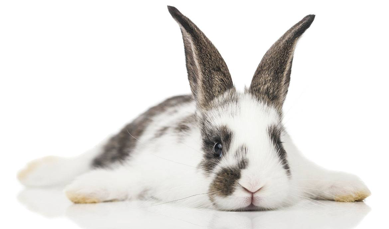 Super DIY - Fabriquez une cabane à lapin - Pour une cage à lapin tout  HJ57