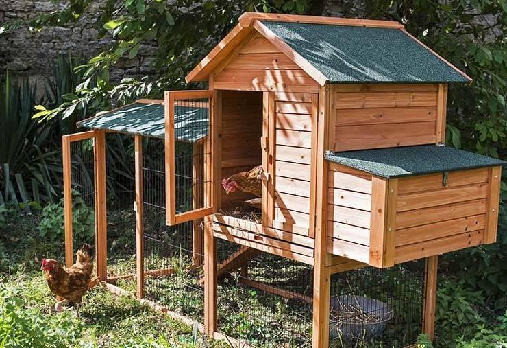 adoptez des poules pondeuses et faites vous un poulailler. Black Bedroom Furniture Sets. Home Design Ideas