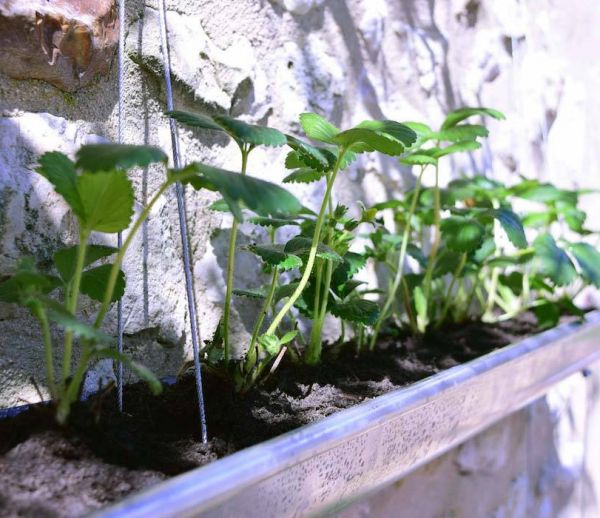 DIY : transformez une gouttière en jardinière