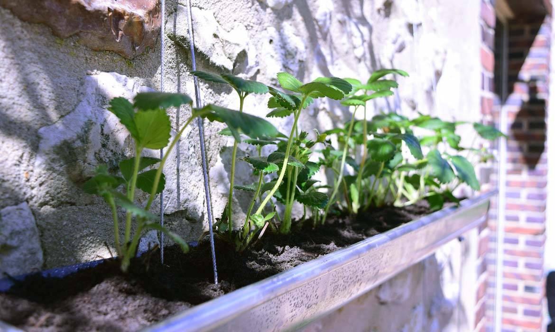 Gouttières en jardinière