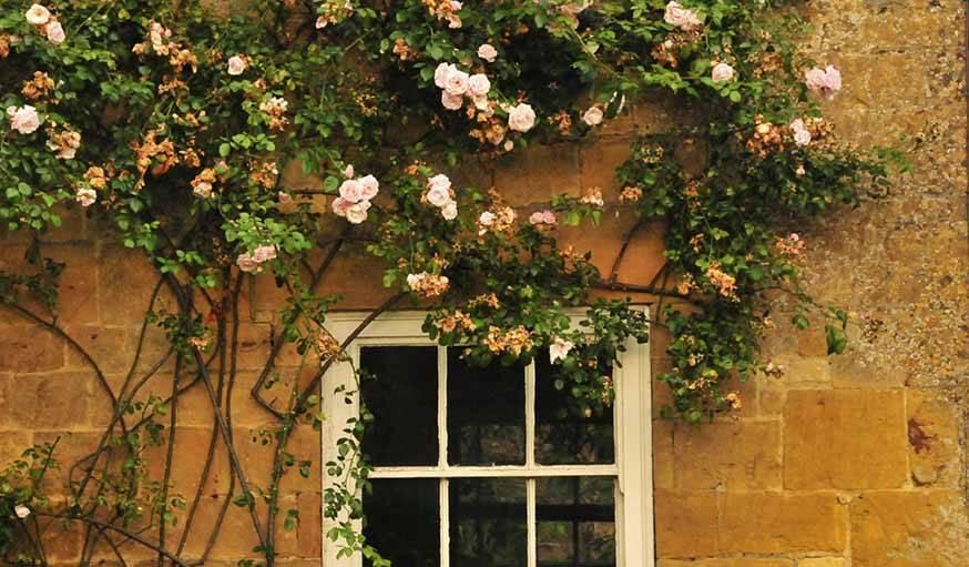 savoir reconna tre son rosier comment reconna tre les vari t s de rosiers. Black Bedroom Furniture Sets. Home Design Ideas