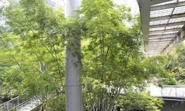 Les Français veulent des villes plus vertes