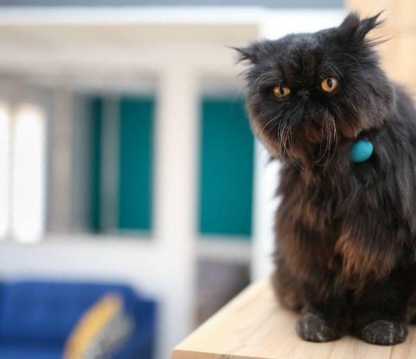 Chiens et chats : un collier connecté pour garder la forme