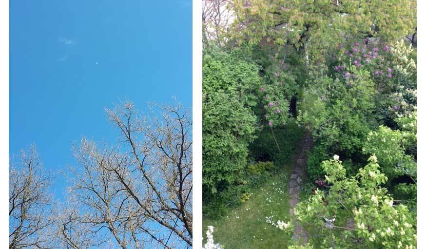 Petite lune perdue dans un ciel bleu à Montauroux (Var) et magnifique jardin printanier à Pavillons sous Bois (93).