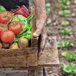 Tomates, salades, pomme de terre... autant de légumes à planter dès maintenant.