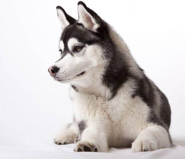 Un chien inspiré repeint la maison de ses maîtres