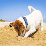 Quels sont les usages des Français quand ils partent en vacances avec leur animal ?