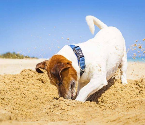 Comment les Français organisent les vacances de leur animal ?