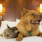 Découvrez toutes les solutions pour faire garder votre animal de compagnie l'été.