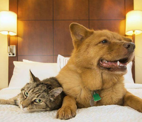 Les solutions pour faire garder son chien ou son chat l'été