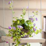 Des étagères pour suspendre ses plantes vertes.