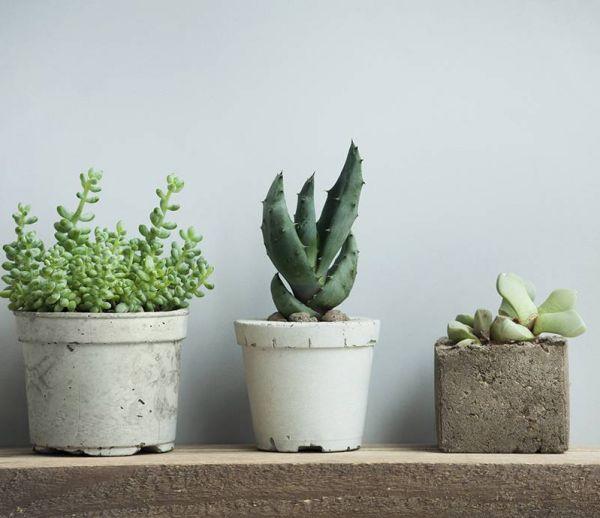 Conseils pour entretenir facilement vos succulentes