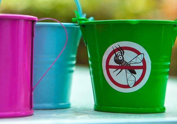 Anti Moustiques Naturels 8 Remedes Pour Eloigner Les