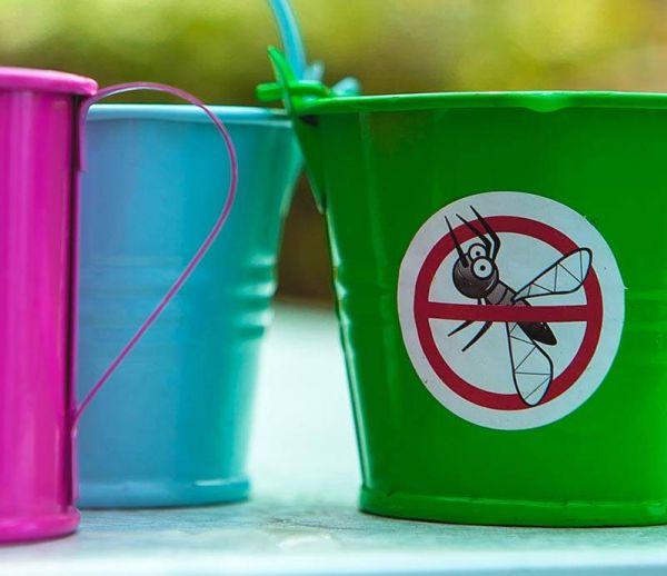 8 solutions naturelles pour éloigner les moustiques de sa maison