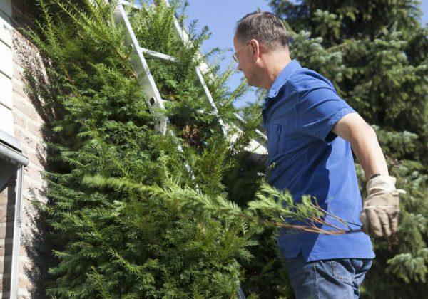 Règles à savoir entre les voisins - Qui doit couper les arbres ...