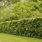 Choisissez les arbustes qui composeront votre haie selon la fonction que vous voulez lui donner.