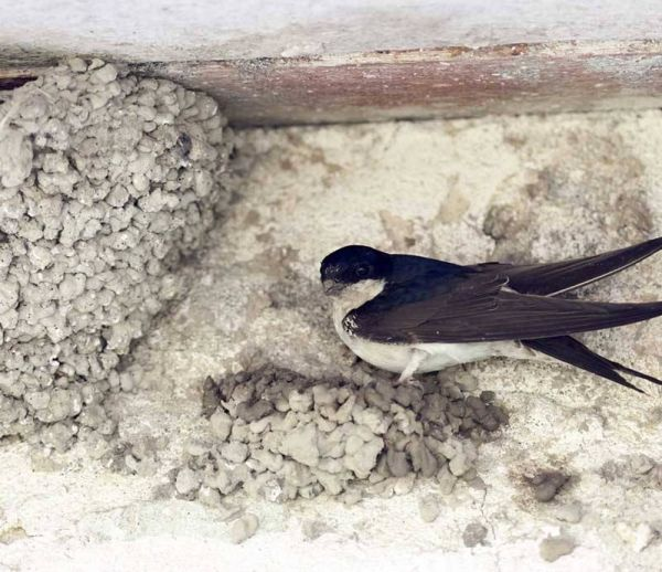 DIY : construire un nid pour hirondelles