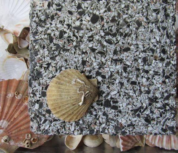 Un béton fabriqué à partir de coquilles Saint-Jacques