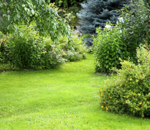 Prendre soin de son jardin à la rentrée