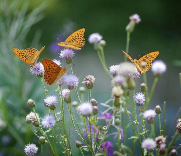 Comment faire revenir les papillons dans son jardin