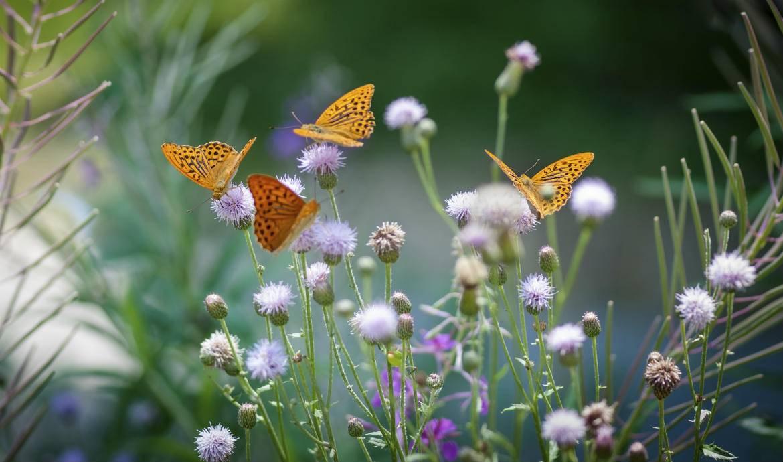 Comment faire revenir les papillons dans son jardin - A poil dans son jardin ...