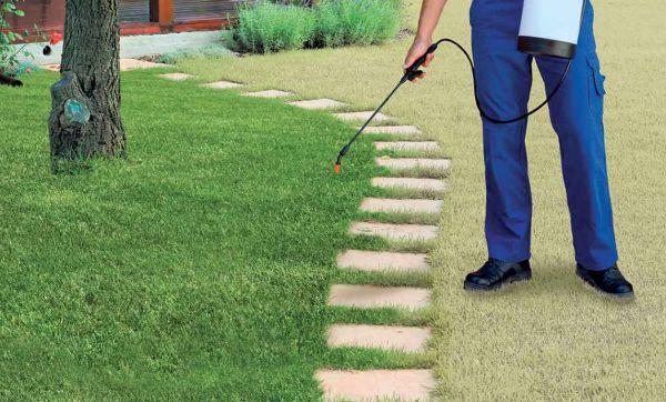 Peindre sa pelouse, comme en Californie