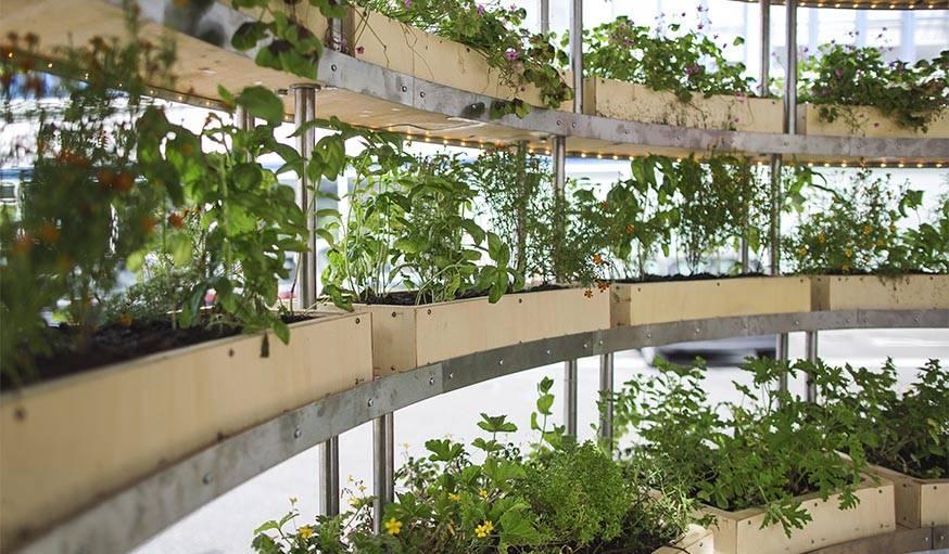 Des végétaux à l'intérieur de the grow room.