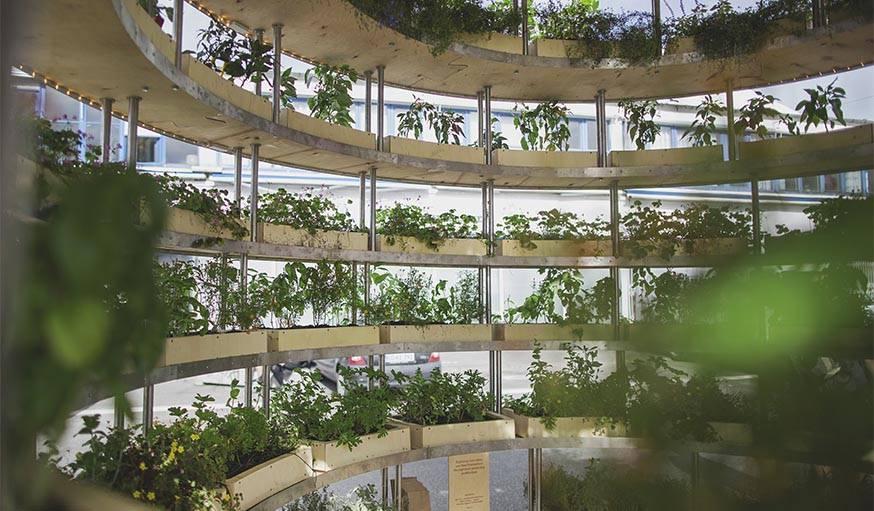 Les plantes vertes à l'intérieur de the grow room.