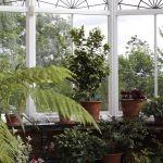Afin de ne pas faire souffrir vos plantes, protégez-les du gel.