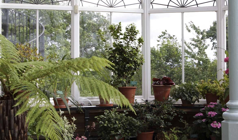 8 conseils pour mettre vos plantes à l'abri du gel