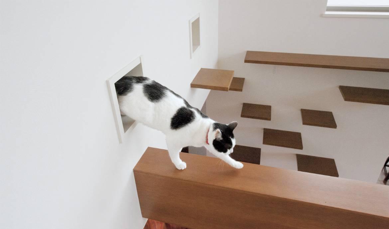 Vivre dans une maison conçue pour... les chats