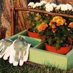 Certaines fleurs ne craignent pas l'hiver et vous assurent un jardin coloré d'octobre à mars.