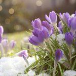 Grâce à ce calendrier de floraison, votre jardin retrouvera des couleurs pendant l'hiver.