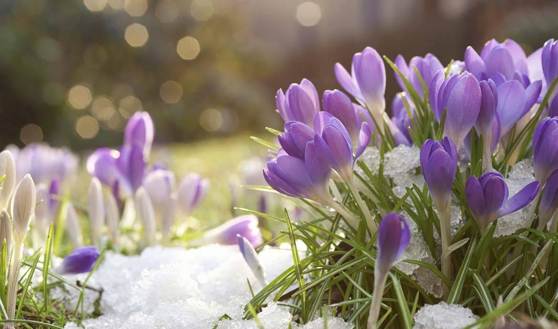 Le calendrier pour avoir un jardin fleuri cet hiver