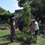Cours de jardinage à la Ferme Communautaire de Taqwa, dans le Bronx, en septembre 2016.