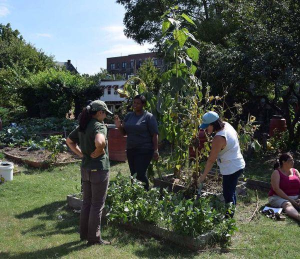 Ces jardins partagés ont changé le visage du Bronx