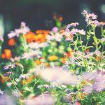 Avoir un jardin coloré en hiver, c'est possible !